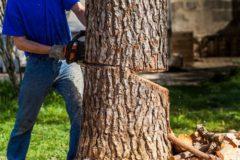 庭のお手入れをお手軽に!SKサービスの庭木伐採工事
